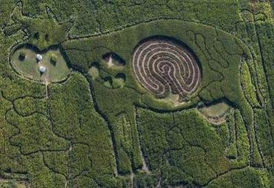 Cow Crop Circles