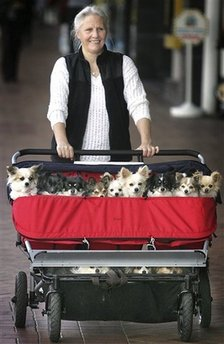 Doggies in Baby Carriage